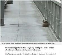 【海外発!Breaking News】飼い主が飛び降り自殺した瞬間を目にした犬、橋の上で帰りを待ち続ける(中国)