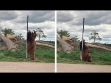 【海外発!Breaking News】背中が痒かった? まるでポールダンサーのようなクマ(米)<動画あり>