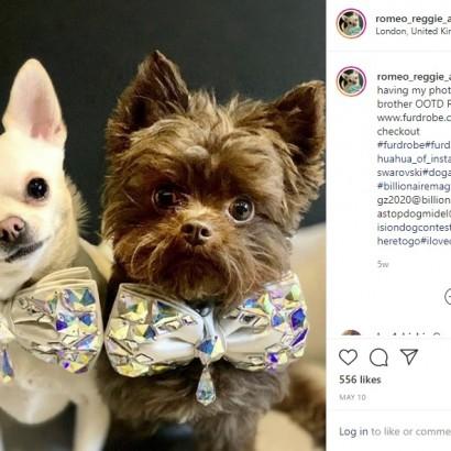 【海外発!Breaking News】犬のブランド服代に270万円、炭酸水とステーキを毎日与える飼い主(英)