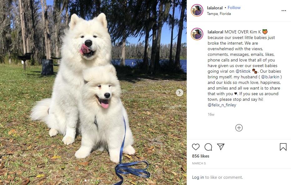 普段は真っ白なフェリックスとフィンレイ(画像は『Lora Lala Larkin 2020年3月5日付Instagram「MOVE OVER Kim K」』のスクリーンショット)
