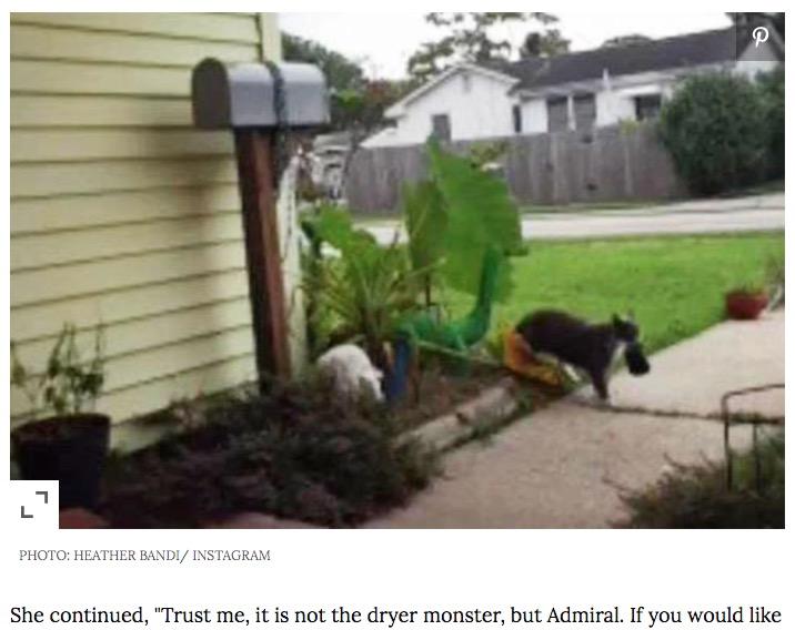 犯人が自分達の飼い猫で驚いた飼い主(画像は『People.com 2020年7月8日付「'Kleptomaniac' Kitty Caught Stealing Neighbors' Clean Laundry, Bathing Suits, Socks and More」(PHOTO: HEATHER BARDI/ INSTAGRAM)』のスクリーンショット)