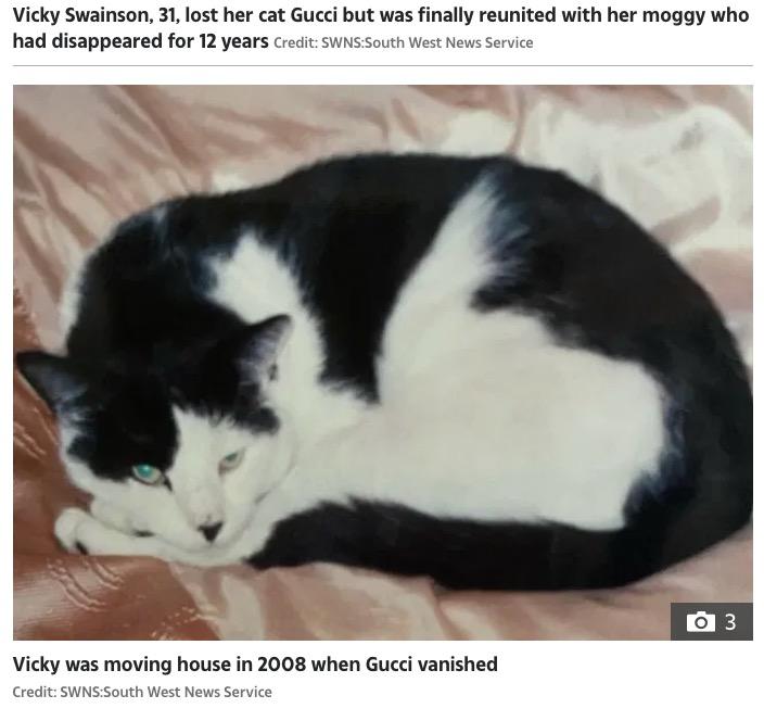 """行方不明になる前の猫の""""グッチ""""(画像は『The Sun 2020年6月30日付「CAT REAPPURRS Woman stunned after being reunited with her missing cat Gucci – 12 YEARS after he vanished」(Credit: SWNS:South West News Service)』のスクリーンショット)"""