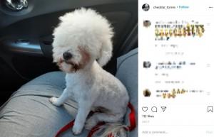 """【海外発!Breaking News】トリマーを噛んだ犬、カット中断でアルパカのように """"本犬""""は満足の様子(米)"""