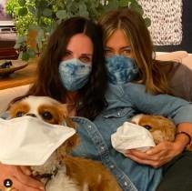 【イタすぎるセレブ達】コートニー・コックスの愛犬達が「マスクをつけて!」 ジェニファー・アニストンも一緒に動画で呼びかけ