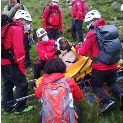 【海外発!Breaking News】55キロのセントバーナード犬、イングランド最高峰で5時間かけて担架で運ばれる<動画あり>