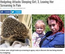 【海外発!Breaking News】3歳少女が就寝中にベッドで野生のハリネズミに襲われる(英)