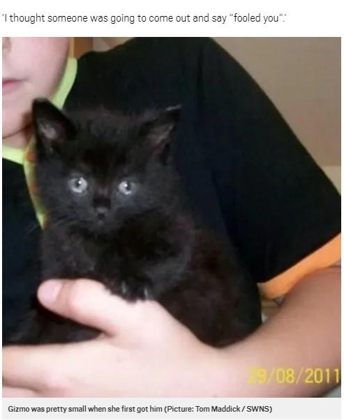 飼い始めた頃、とても小さかったギズモ(画像は『Metro 2020年7月19日付「Missing cat reunited with his owner six years after he disappeared」(Picture: Tom Maddick / SWNS)』のスクリーンショット)