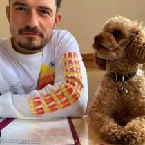 【イタすぎるセレブ達】オーランド・ブルーム、行方不明の愛犬を思い悲痛なメッセージ綴る