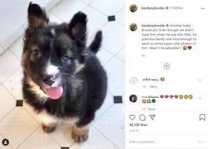 まだ小さかった頃のブロディ(画像は『Brodie 2020年6月25日付Instagram「Another baby Brodie pic!」』のスクリーンショット)