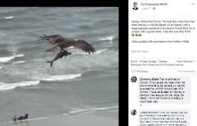 【海外発!Breaking News】ビーチ上空を飛ぶ鳥、鉤爪で掴んでいるのはサメ?(米)<動画あり>