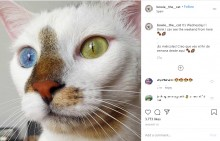 【海外発!Breaking News】青と緑の美しい瞳を持つオッドアイの猫「ボウイ」名前はあの世界的アーティストから(スペイン)