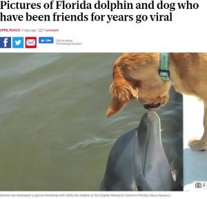 【海外発!Breaking News】6年前からずっと仲良しの犬とイルカ、種族を超えた友情が美しい(米)