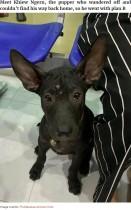 【海外発!Breaking News】街で迷子になった子犬 馴染みの動物病院に助けを求める(タイ)<動画あり>