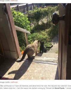 アイダさんが飼っているブルースと野良猫のサラミ(画像は『Bored Panda 2020年7月21日付「Stray Cat 'Asks' Woman To Let Her Inside So She Can Have Her Babies」(Image credits: idafloreak)』のスクリーンショット)