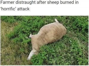【海外発!Breaking News】何者かが生きたまま羊に火を付ける あまりの残酷さに「理解できない」(英)