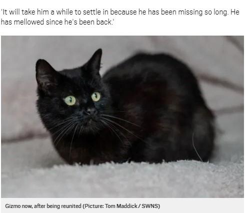 無事にゾーイさんの家に戻ったギズモ(画像は『Metro 2020年7月19日付「Missing cat reunited with his owner six years after he disappeared」(Picture: Tom Maddick / SWNS)』のスクリーンショット)