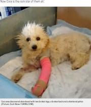 【海外発!Breaking News】前足を骨折し捨てられたプードル、保護され後ろ足で歩くことを覚えて元気いっぱいに(米)<動画あり>