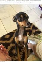 【海外発!Breaking News】車椅子の飼い主が動きやすいように、家のマットを移動する犬(ブラジル)<動画あり>