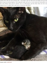 【海外発!Breaking News】朝5時に顔なじみの野良猫の訪問を受けた女性「赤ちゃんを産むためだったの!」(米)