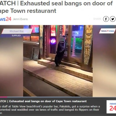 【海外発!Breaking News】ロックダウンで観光客ゼロ 餌がもらえず疲れ切ったオットセイがレストランのドアを叩く(南ア)<動画あり>