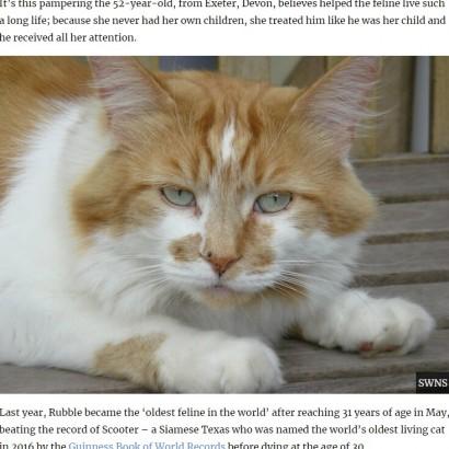 【海外発!Breaking News】「世界一長寿」と報じられた猫 31歳で天寿を全う(英)