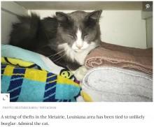 【海外発!Breaking News】玄関前に謎の衣類、近所から洗濯物を盗んだ猫の仕業と知り飼い主唖然(米)