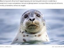 【海外発!Breaking News】「写真撮影のため」アザラシが失神するまで叩きのめした観光客に怒りの声(カザフスタン)<動画あり>