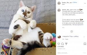 箱の中で遊ぶボウイ(画像は『Bowie The Cat 2019年10月4日付Instagram「If it fits I sits!」』のスクリーンショット)