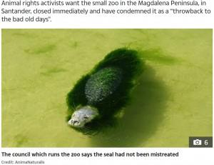 【海外発!Breaking News】飼育放棄され藻に覆われたアザラシ スペインの動物園に非難殺到<動画あり>