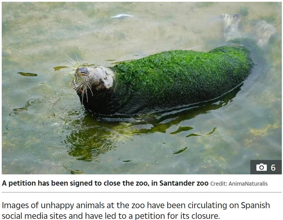 体の半分ほどしかないプールに浸かるアザラシ(画像は『The Sun 2020年6月29日付「'LETTING ITSELF DIE' Pictures of neglected seal with seaweed growing all over its fur at 'cruel' zoo in Spain spark outrage」(Credit: AnimaNaturalis)』のスクリーンショット)
