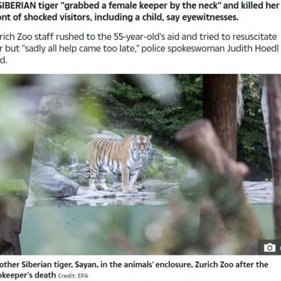【海外発!Breaking News】シベリアトラに襲われた飼育員が死亡 営業再開したばかりのスイスの動物園で