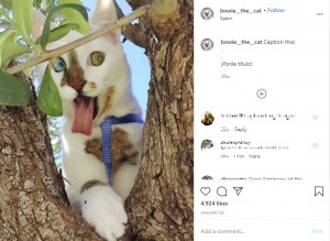 愛嬌たっぷりのボウイ(画像は『Bowie The Cat 2020年1月24日付Instagram「Caption this!」』のスクリーンショット)