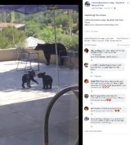【海外発!Breaking News】子グマのきょうだいが真剣レスリング 誰もいない宿泊施設の中庭で(米)<動画あり>