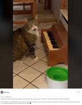 【海外発!Breaking News】ピアノを弾いて餌を要求する猫 飼い主「今じゃないでしょ」(米)<動画あり>