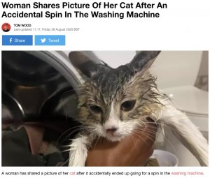 【海外発!Breaking News】猫が中に…知らずに洗濯機を回した女性「蓋をする前に確認を」呼びかける(米)