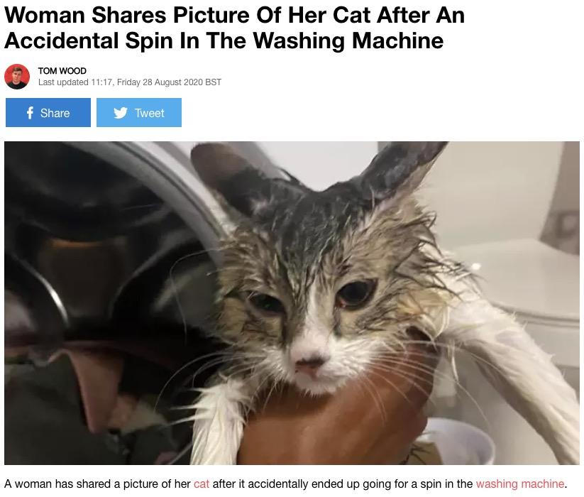 洗濯機から救出された猫(画像は『LADbible 2020年8月28日付「Woman Shares Picture Of Her Cat After An Accidental Spin In The Washing Machine」(Credit: Kennedy News and Media)』のスクリーンショット)