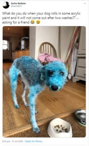 【海外発!Breaking News】絵の上で転がり回った犬、鮮やかなブルーに染まり飼い主がSNSで助けを求める(英)