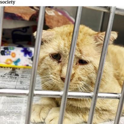 """【海外発!Breaking News】""""世界一悲しそうな猫""""引き取られて1年で""""幸せいっぱいの猫""""に(米)<動画あり>"""