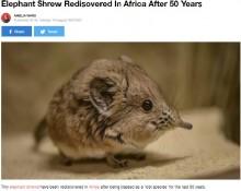 【海外発!Breaking News】50年ぶりにアフリカで発見! 象の仲間ソマリ・ハネジネズミの姿に専門家も大興奮
