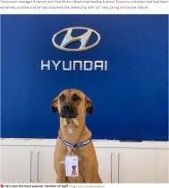 【海外発!Breaking News】自動車販売店に通い続けた野良犬、店舗に採用され見事に昇進も!(ブラジル)