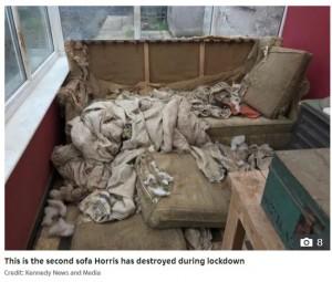 ハリスが以前に引き裂いたソファー(画像は『The Sun 2020年8月5日付「IN THE DOGHOUSE Puppy chomps through £1,500 worth of clothing and furniture - including two sofas」(Credit: Kennedy News and Media)』のスクリーンショット)
