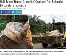【海外発!Breaking News】体重500kg超「悪魔のワニ」をついに捕獲も重すぎてブルドーザーで移動(インドネシア)<動画あり>