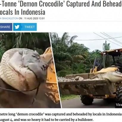 【海外発!Breaking News】体重500kg超「悪魔のワニ」をついに捕獲も重すぎてブルドーザーで移動(インドネシア)