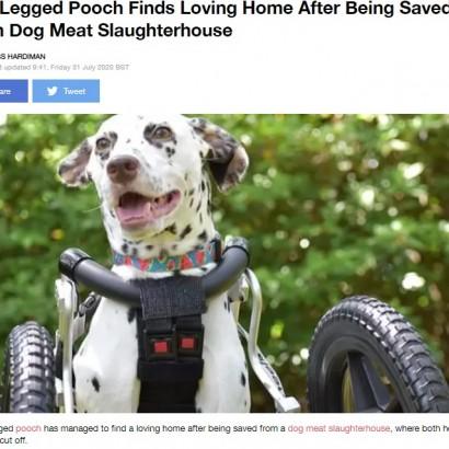 【海外発!Breaking News】「肉を柔らかくするため」前足を切断された犬 中国の犬肉処理施設から救出され第2の人生を歩む<動画あり>