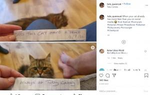 トゥーラの首に巻かれていたメモ(画像は『Tula Cat 2020年8月19日付Instagram「When your cat already has more likes than you on social media」』のスクリーンショット)