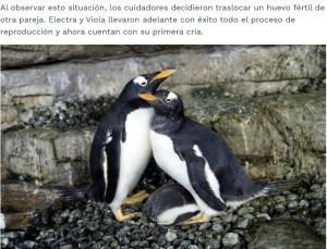 【海外発!Breaking News】雌同士のペンギンカップル、与えられた卵の孵化に成功 スペインの水族館で<動画あり>