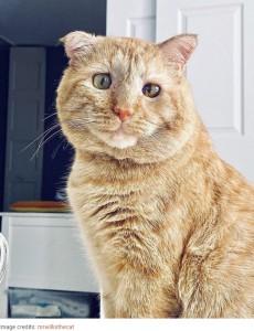 お茶目な表情を見せるブルース(画像は『Bored Panda 2020年8月28日付「After Convincing Landlord, Woman Brings The Saddest Stray Cat Home, A Year Later, He's Unrecognizable」(Image credits: mrwillisthecat)』のスクリーンショット)