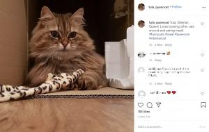 【海外発!Breaking News】おこぼれを狙いレストランに通っていた猫、スタッフの機転により御用に(英)