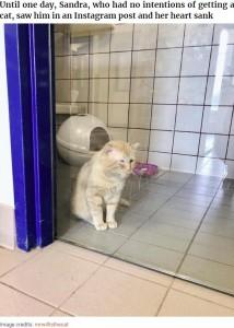 悲しそうなオス猫を見て放っておけなかったというサンドラさん(画像は『Bored Panda 2020年8月28日付「After Convincing Landlord, Woman Brings The Saddest Stray Cat Home, A Year Later, He's Unrecognizable」(Image credits: mrwillisthecat)』のスクリーンショット)