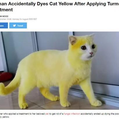 【海外発!Breaking News】感染症治療のためターメリックを塗られた猫、ピカチュウのような黄色に染まる(タイ)